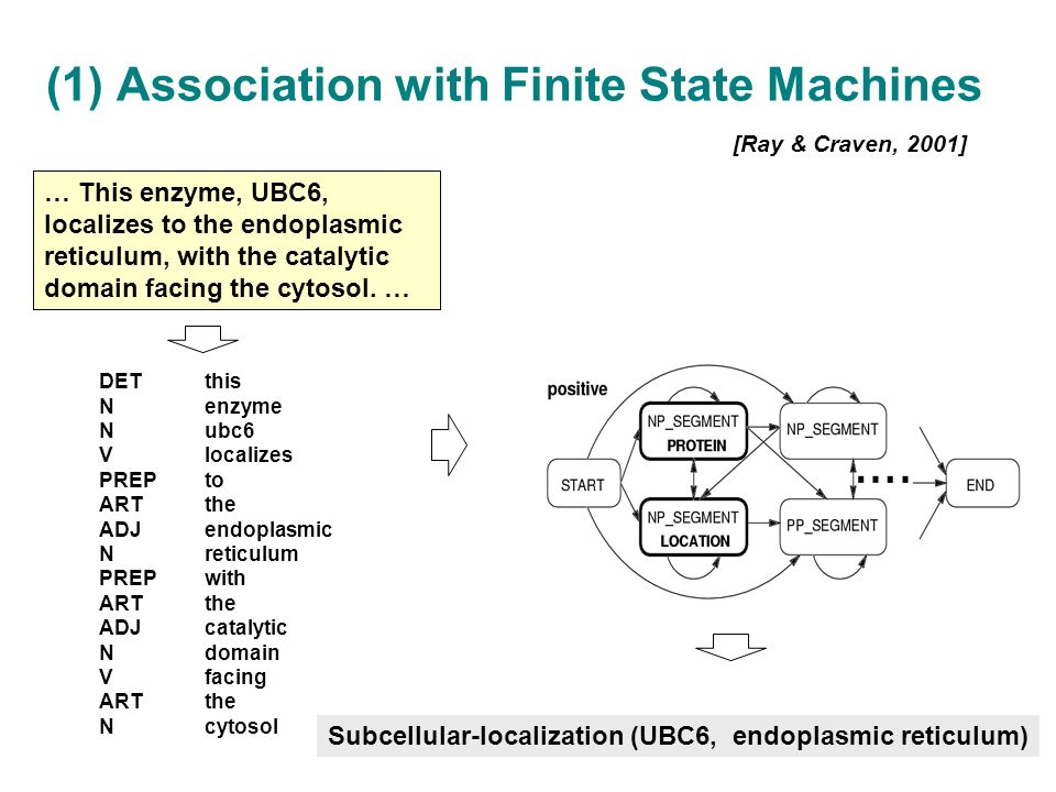 (1) Association with Finite State Machines [Ray & Craven, 2001] … This enzyme, UBC6, localizes to the endoplasmic reticulum, with the catalytic domain facing the cytosol.