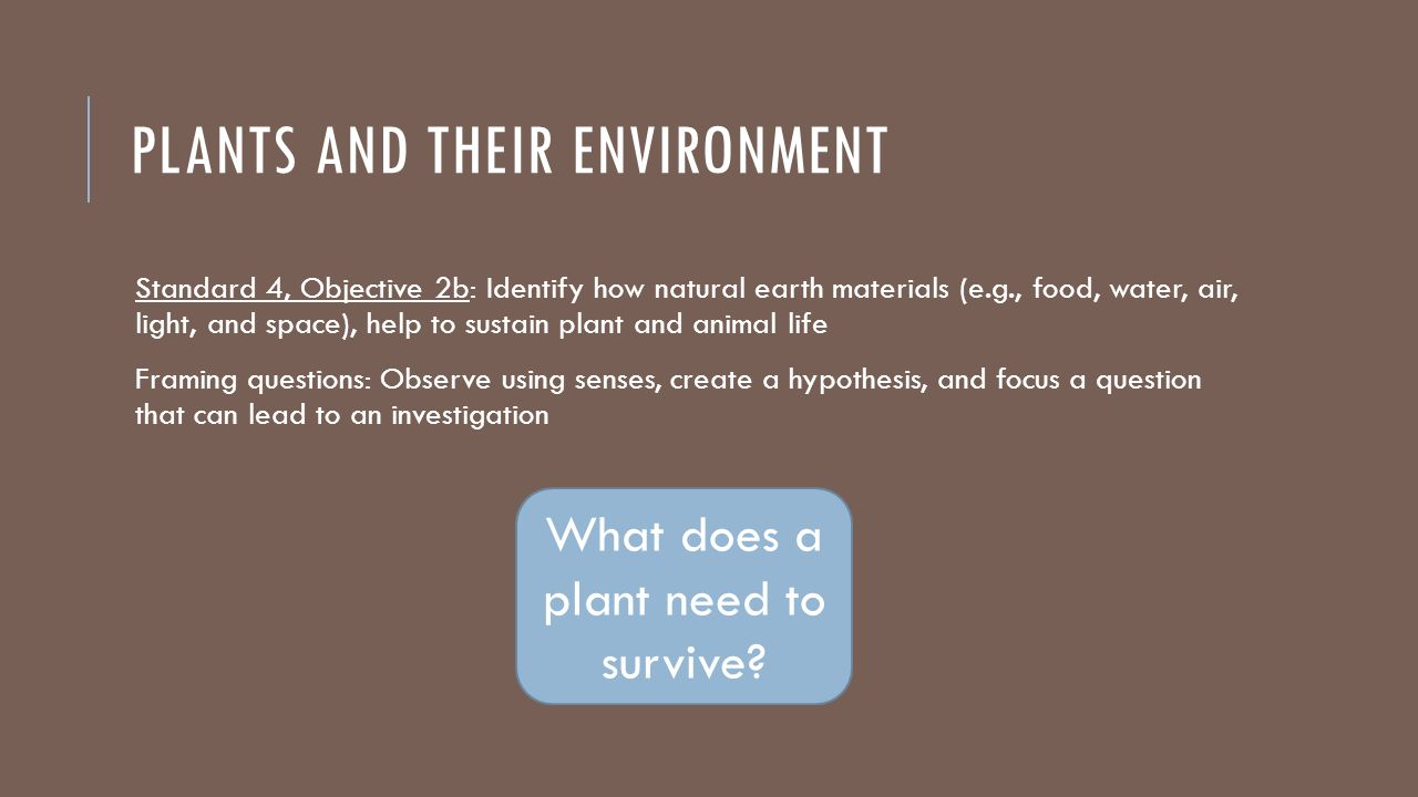 PLANTS AND THEIR ENVIRONMENT Standard 4, Objective 2b: Identify how natural earth materials (e.g., food, water, air, light, and space), help to sustain plant and animal life Framing questions: Observe using senses, create a hypothesis, and focus a question that can lead to an investigation What does a plant need to survive