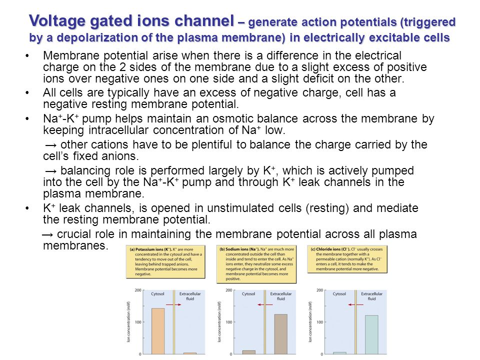 Membrane transport of small molecules and the electrical properties ...