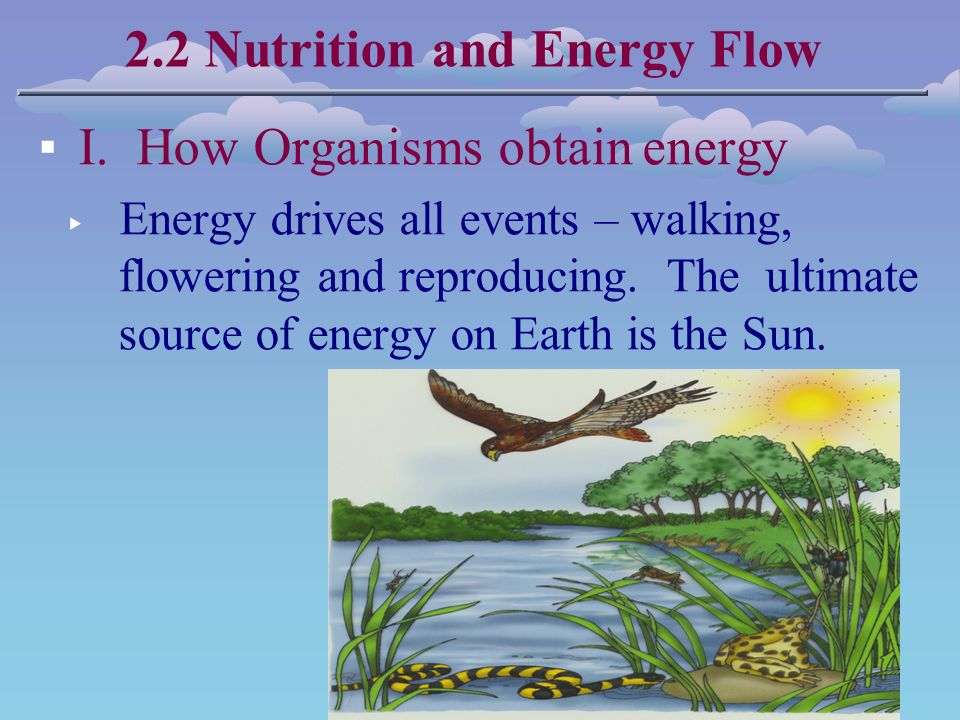 2.2 Nutrition and Energy Flow ▪ I.
