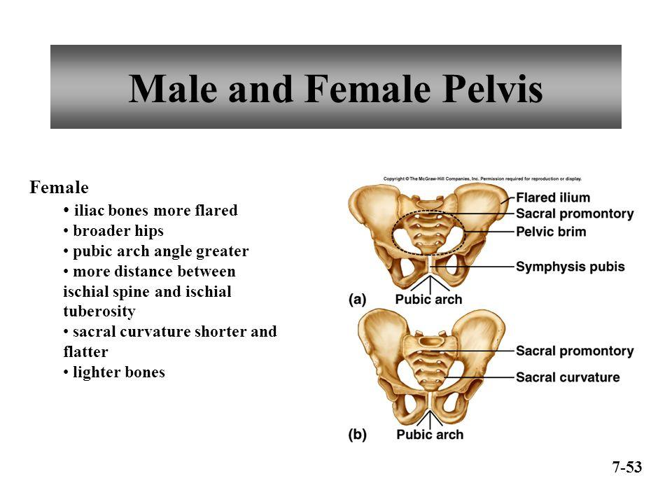 Anatomy And Physiology Of Pelvis Homework Academic Service