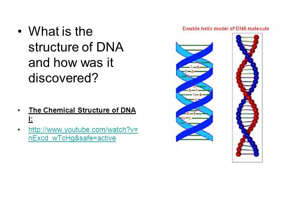 the role and structure of dna Nucleic acid structure refers to the structure of nucleic acids such as dna and rnachemically speaking, dna and rna are very similar nucleic acid structure is often divided into four different levels: primary, secondary, tertiary and quaternary.