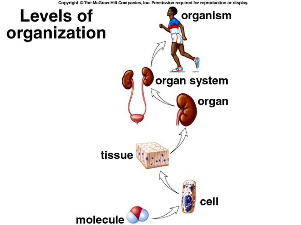 CST Review Protein Synthesis and Physiology. Part I. Protein ...