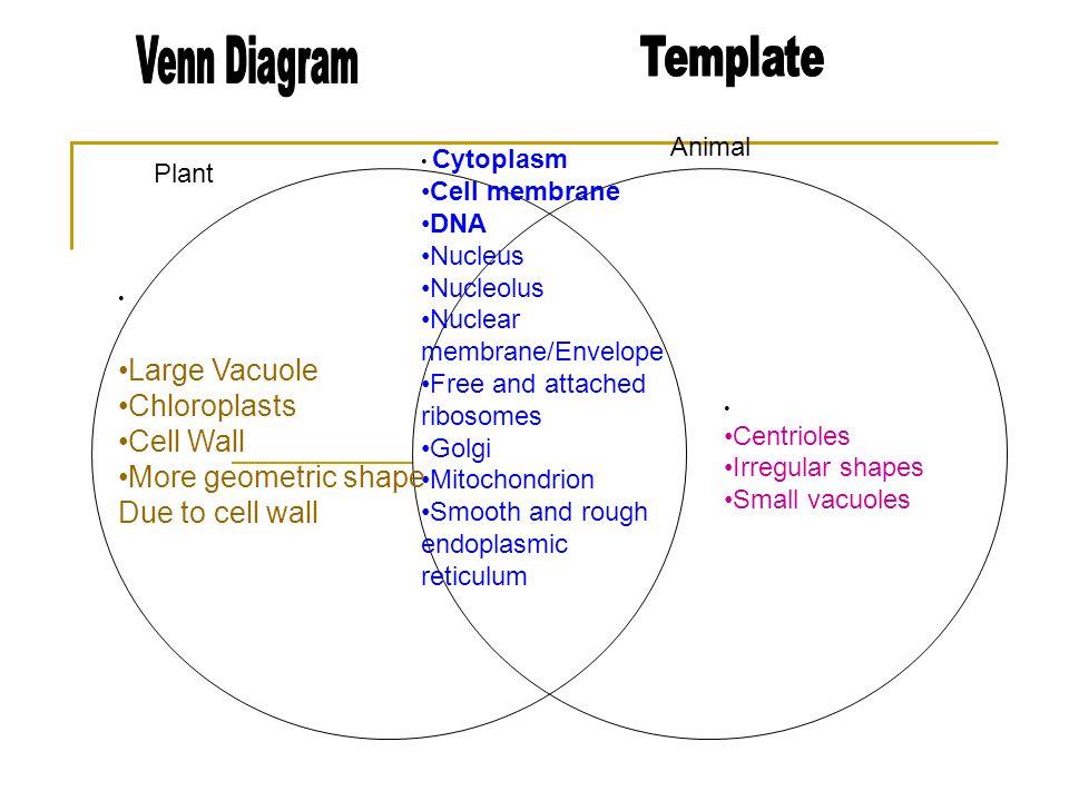 Major Organs Prokaryotic And Eukaryotic Cells Venn Diagram Wiring