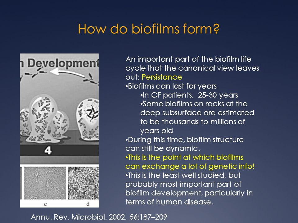 Biofilms and bacterial toxin production: Coordinated metabolic ...