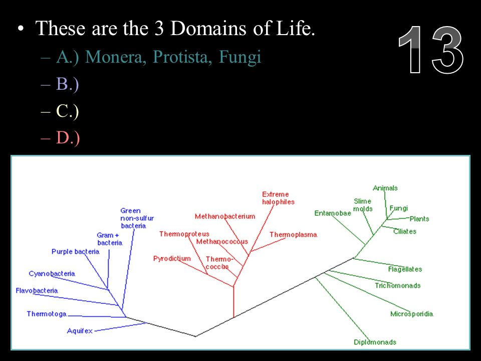 These are the 3 Domains of Life.