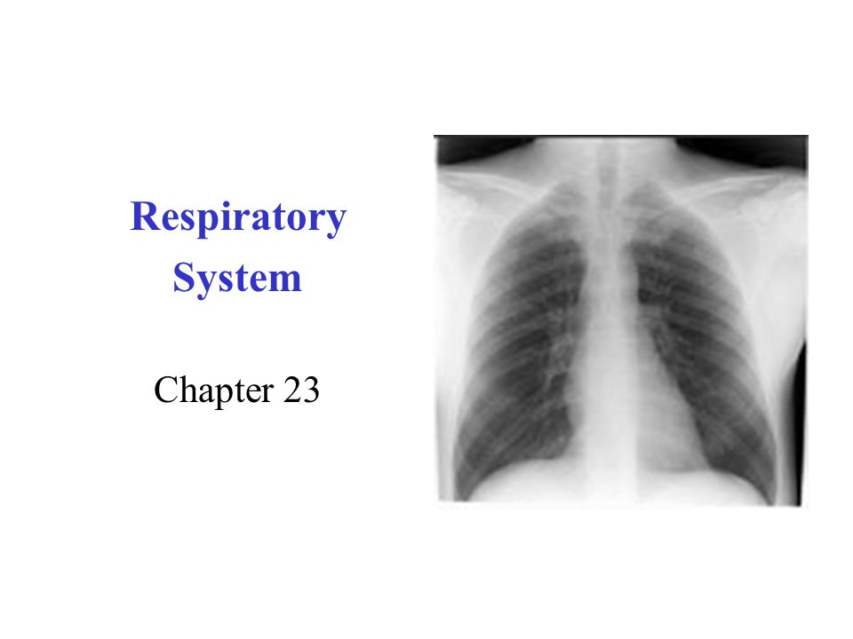 Respiratory System Chapter 23