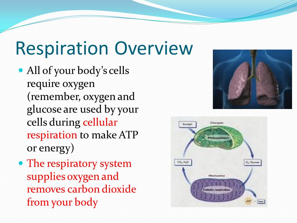 Respiration Overview All of your body's cells require oxygen (remember, oxygen and glucose are used by your cells during cellular respiration to make ATP or energy) The respiratory system supplies oxygen and removes carbon dioxide from your body