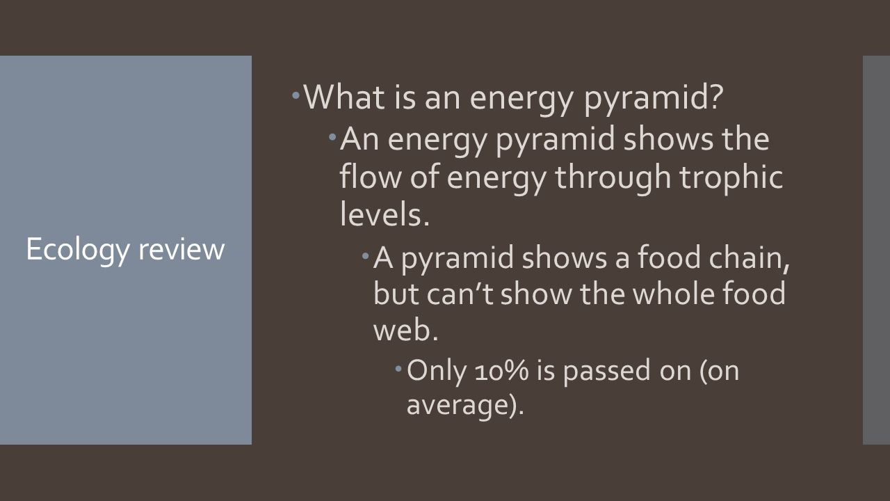 Ecology review  What is an energy pyramid.