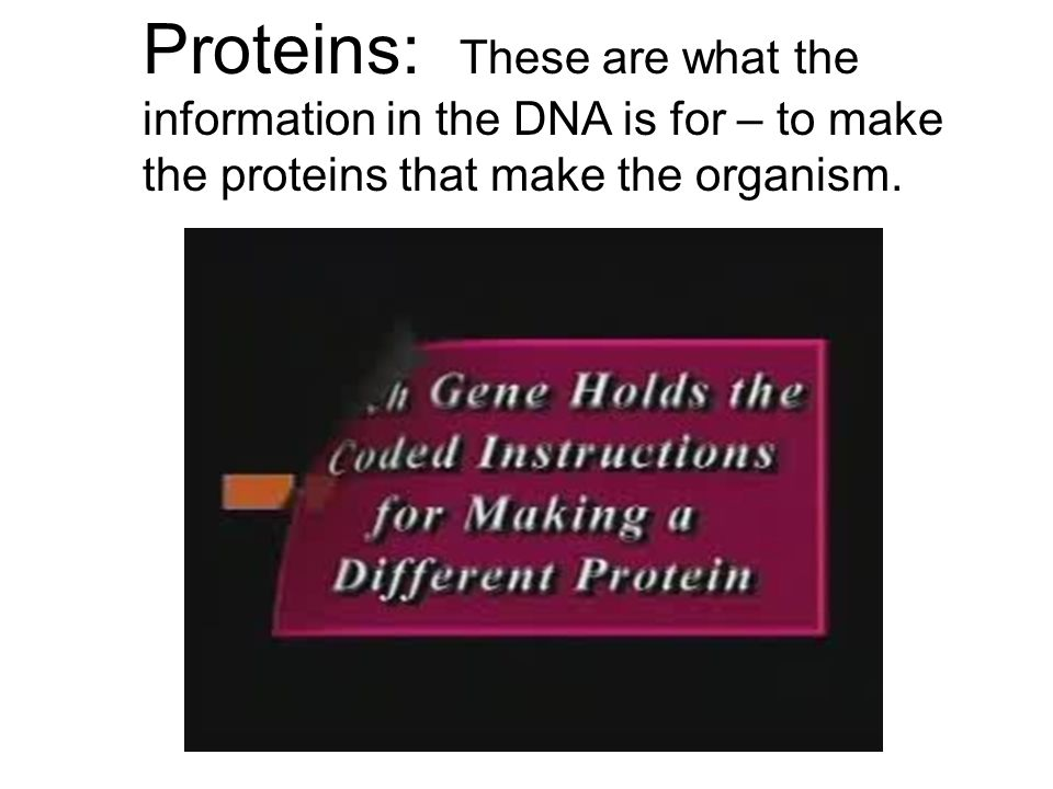 Proteins: These are what the information in the DNA is for – to make the proteins that make the organism.