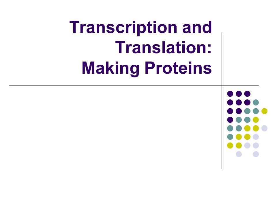 Transcription and Translation: Making Proteins