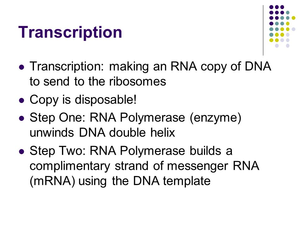 Transcription Transcription: making an RNA copy of DNA to send to the ribosomes Copy is disposable.