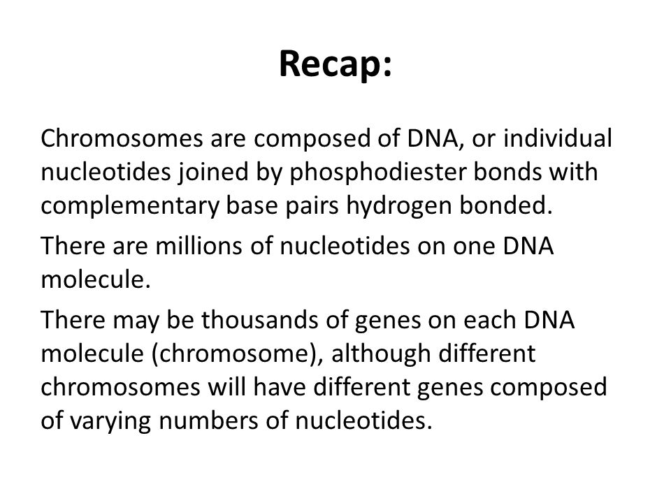 Recap: Chromosomes are composed of DNA, or individual nucleotides joined by phosphodiester bonds with complementary base pairs hydrogen bonded.