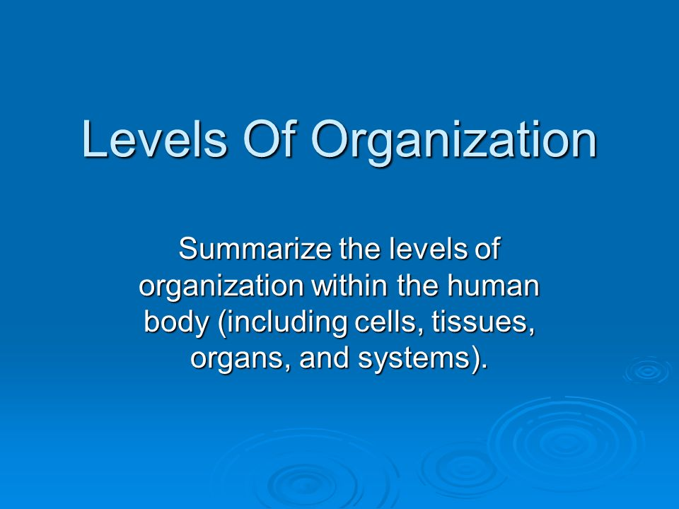 Levels Of Organization Summarize the levels of organization within the human body (including cells, tissues, organs, and systems).