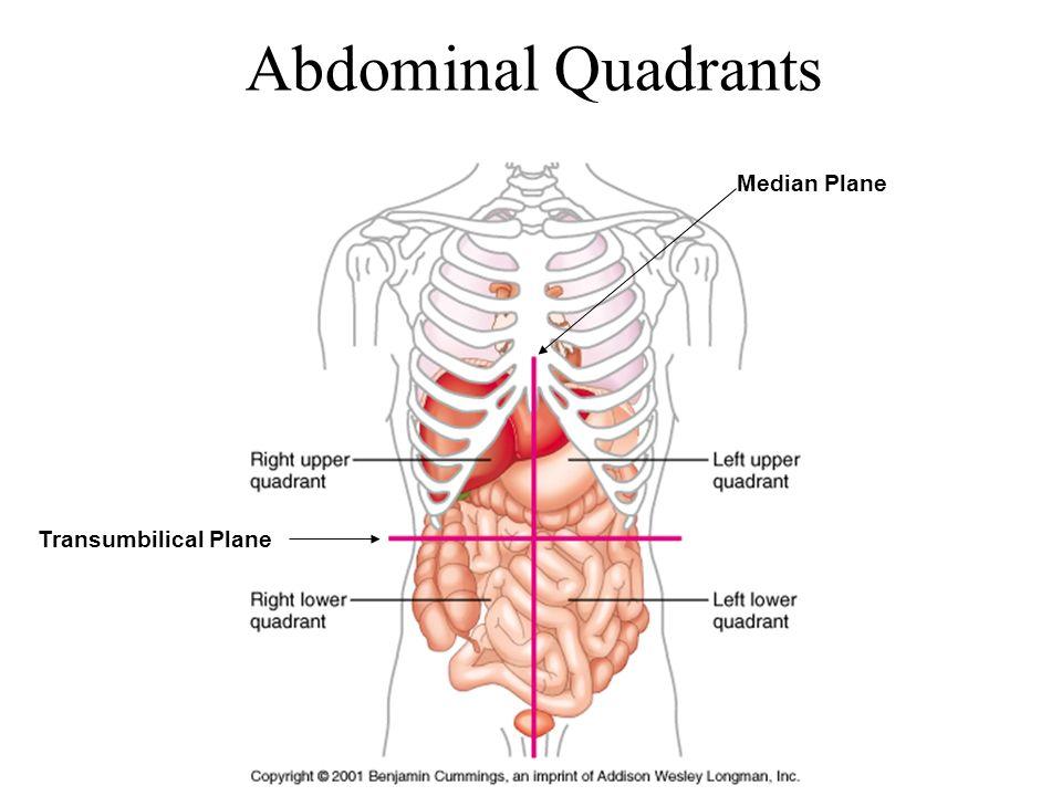 Abdominal region i pa 481 anatomy physiology tony serino phd 4 abdominal quadrants median plane transumbilical plane ccuart Image collections