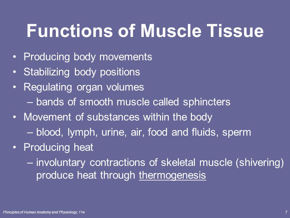 human muscle fatigue physiological mechanisms – citybeauty, Muscles