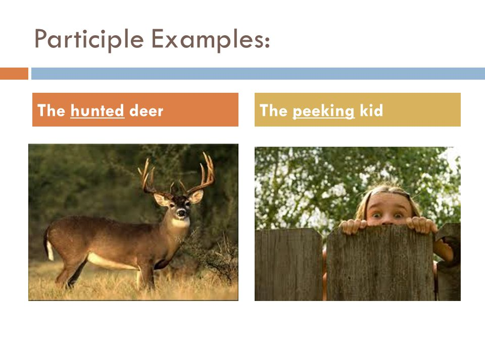 Participle Examples: The hunted deerThe peeking kid