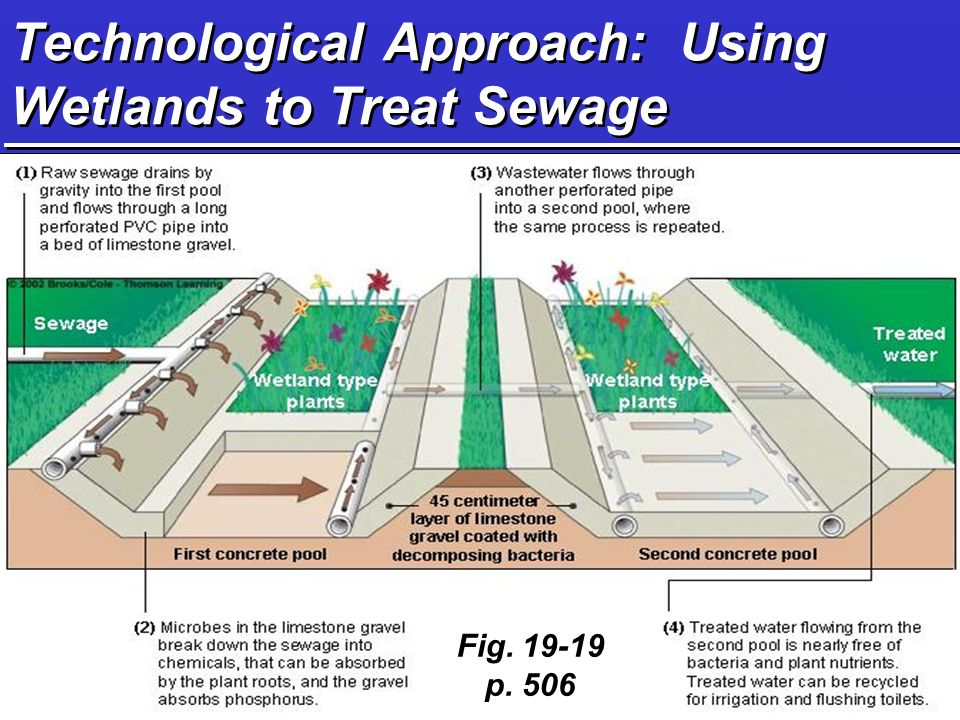 Technological Approach: Using Wetlands to Treat Sewage Fig p. 506