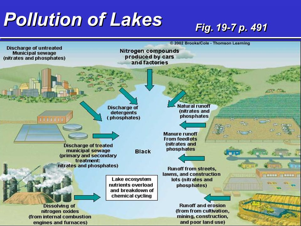 Pollution of Lakes Fig p. 491