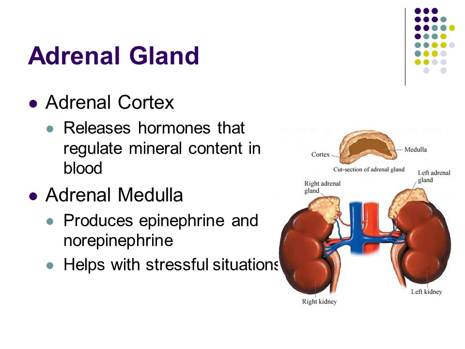 Human Endocrine System Endocrine Overview Hormones Chemical