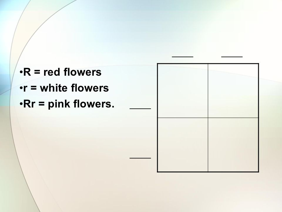 R = red flowers r = white flowers Rr = pink flowers. ____