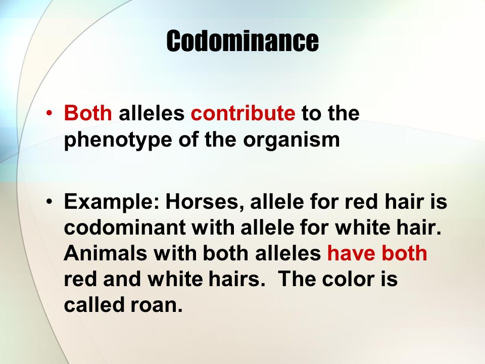 Codominance Both alleles contribute to the phenotype of the organism Example: Horses, allele for red hair is codominant with allele for white hair.