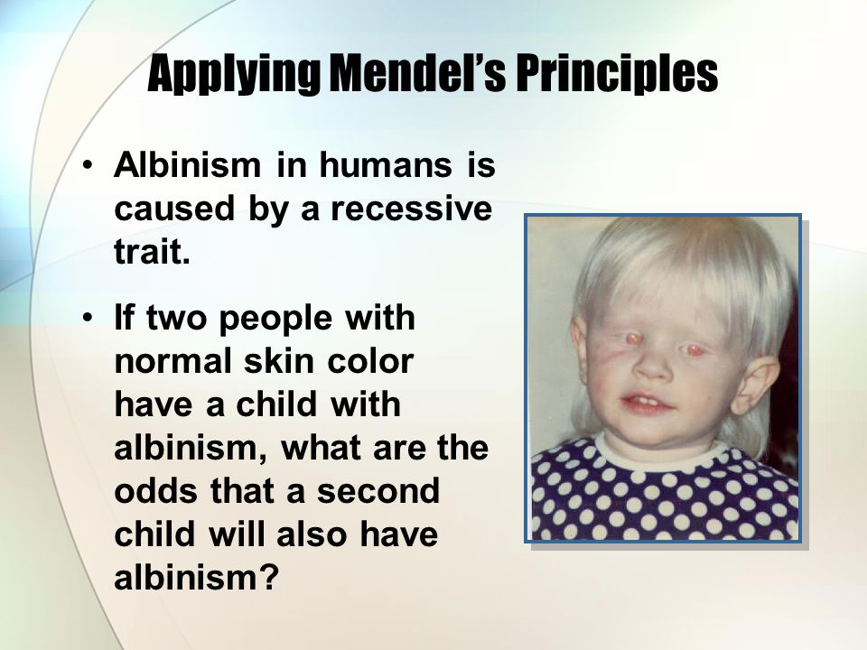 Applying Mendel's Principles Albinism in humans is caused by a recessive trait.