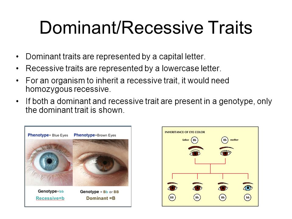 3 Dominant/Recessive Traits ...