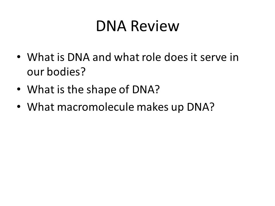 RNA and Transcription DNA Review What is DNA and what role does – Dna Review Worksheet Answer Key