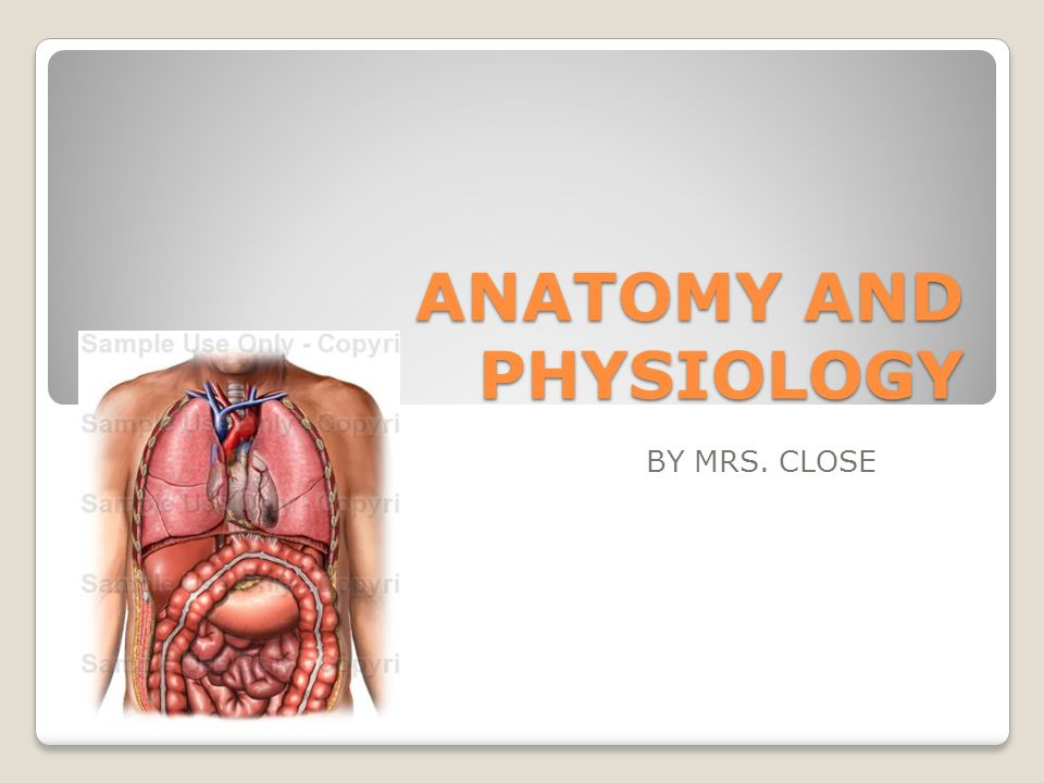 ANATOMY AND PHYSIOLOGY BY MRS. CLOSE DIRECTIONAL TERMS. - ppt download