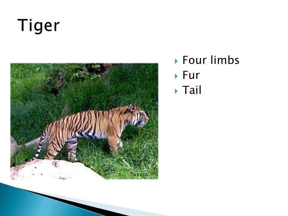  Four limbs  Fur  Tail