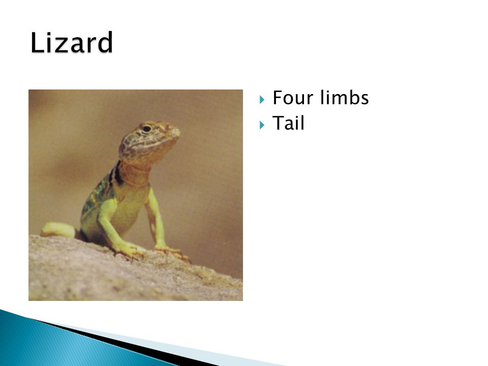  Four limbs  Tail