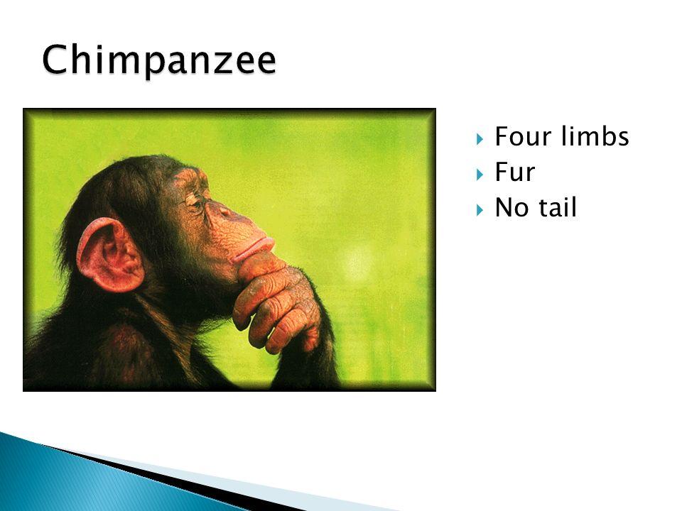  Four limbs  Fur  No tail