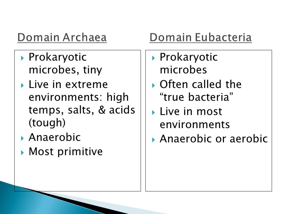  Prokaryotic microbes, tiny  Live in extreme environments: high temps, salts, & acids (tough)  Anaerobic  Most primitive  Prokaryotic microbes  Often called the true bacteria  Live in most environments  Anaerobic or aerobic