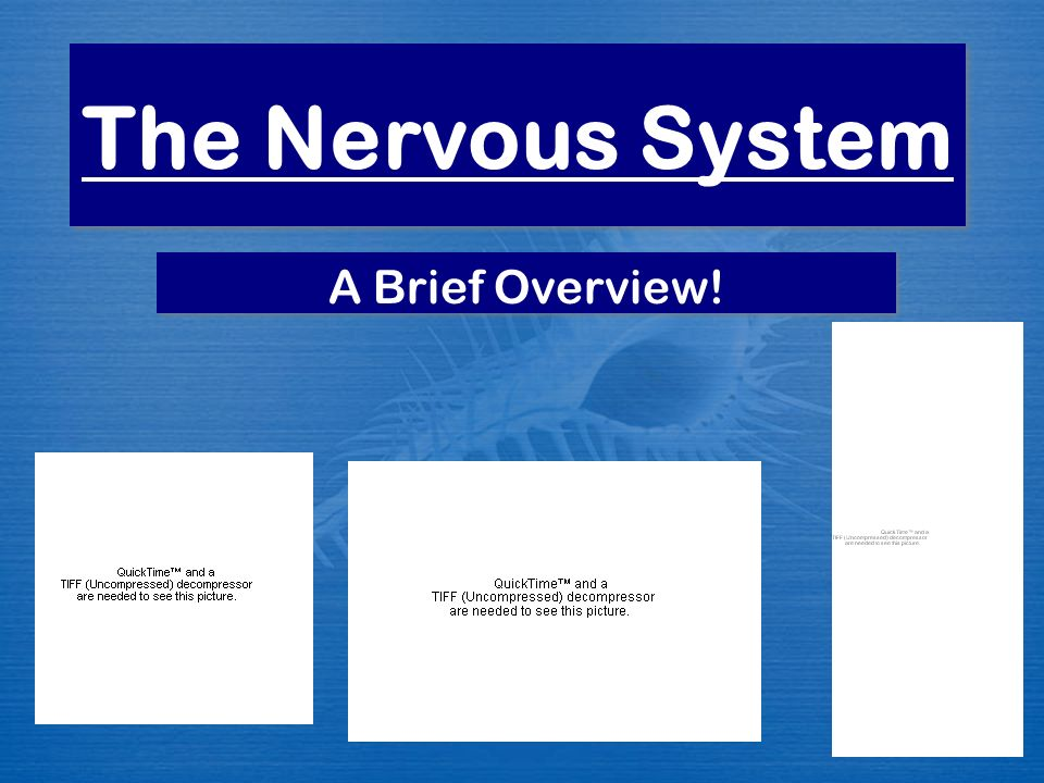 The Nervous System A Brief Overview!