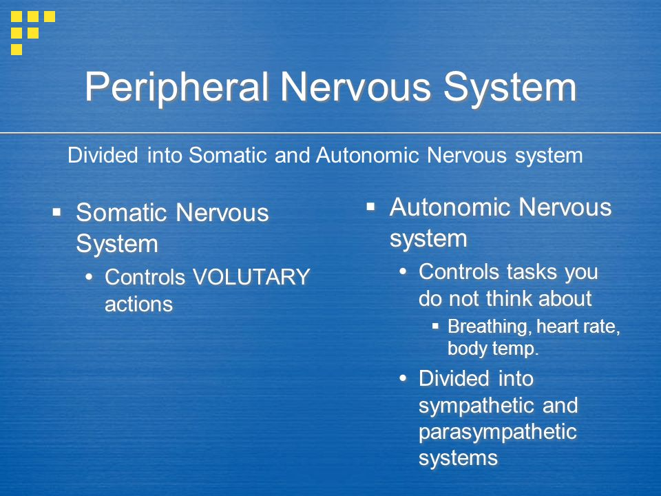 Peripheral Nervous System  Somatic Nervous System  Controls VOLUTARY actions  Somatic Nervous System  Controls VOLUTARY actions  Autonomic Nervous system  Controls tasks you do not think about  Breathing, heart rate, body temp.