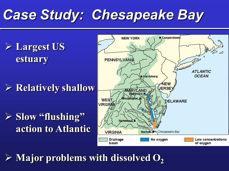 Case Study: Chesapeake Bay  Largest US estuary  Relatively shallow  Slow flushing action to Atlantic  Major problems with dissolved O 2
