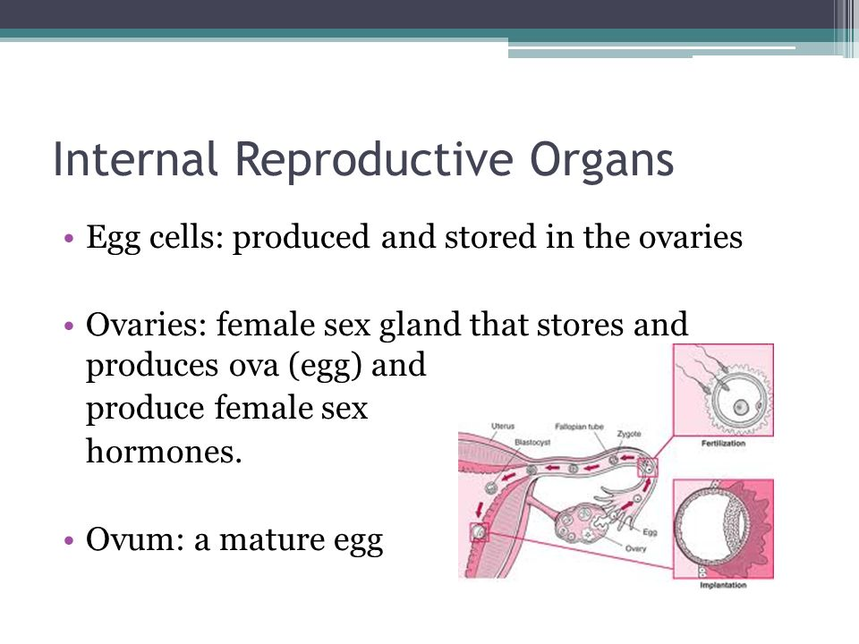 Internal Reproductive Organs Egg cells: produced and stored in the ovaries Ovaries: female sex gland that stores and produces ova (egg) and produce female sex hormones.