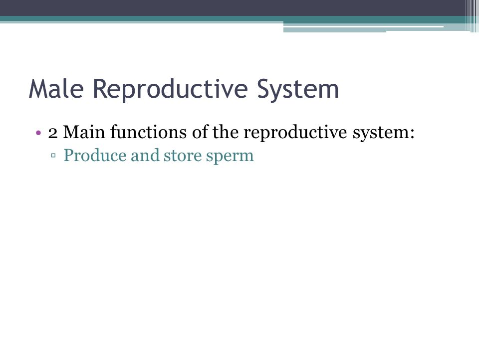 Male Reproductive System 2 Main functions of the reproductive system: ▫Produce and store sperm