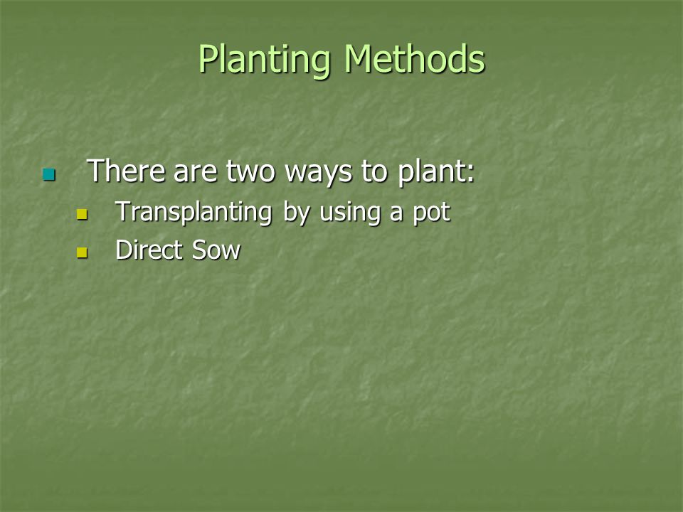 Planting Methods There are two ways to plant: There are two ways to plant: Transplanting by using a pot Transplanting by using a pot Direct Sow Direct Sow