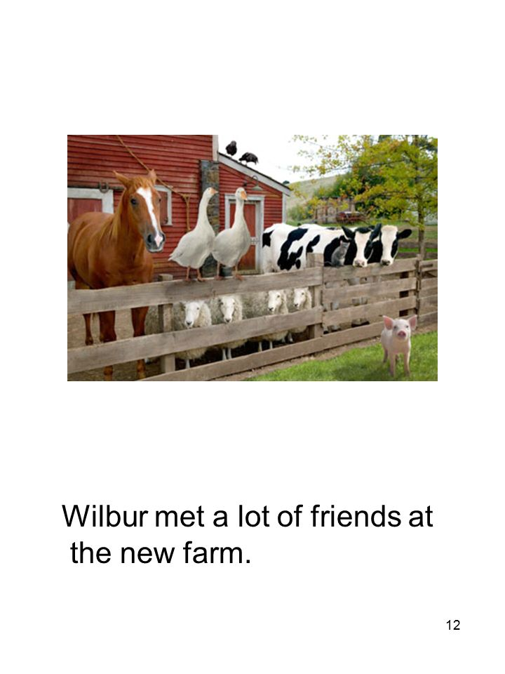 12 Wilbur met a lot of friends at the new farm.