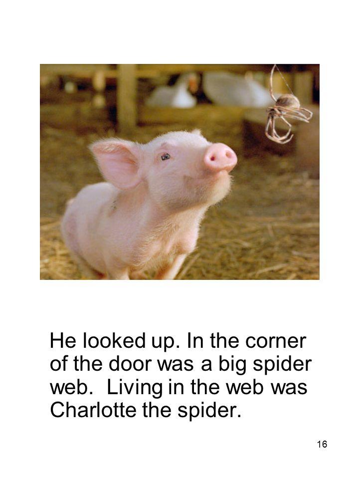 16 He looked up. In the corner of the door was a big spider web.