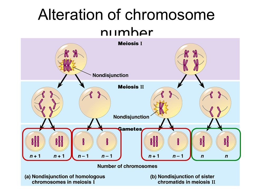 Alteration of chromosome number