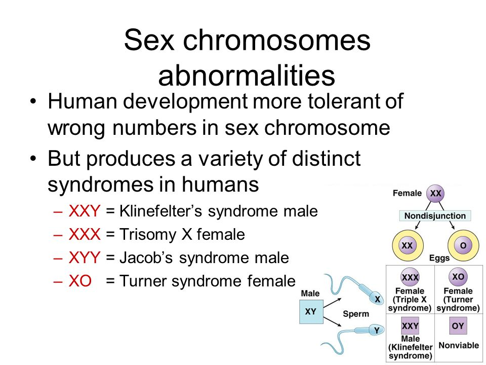 Sex chromosomes abnormalities Human development more tolerant of wrong numbers in sex chromosome But produces a variety of distinct syndromes in humans –XXY = Klinefelter's syndrome male –XXX = Trisomy X female –XYY = Jacob's syndrome male –XO = Turner syndrome female
