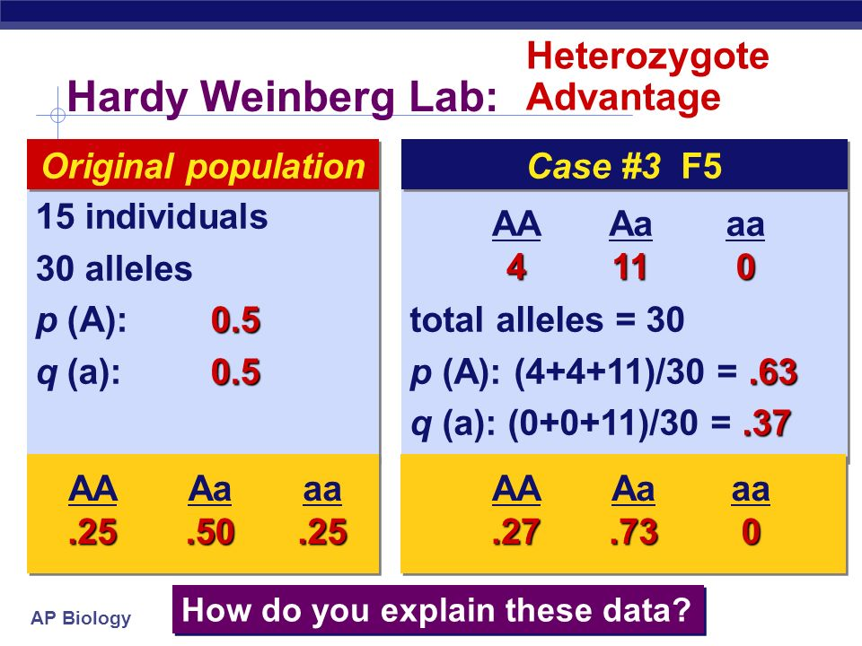 AP Biology Hardy Weinberg Lab: Selection total alleles = p (A): (9+9+6)/30 = q (a): (0+0+6)/30 =.20 total alleles = p (A): (9+9+6)/30 = q (a): (0+0+6)/30 = individuals 30 alleles 0.5 p (A): q (a): individuals 30 alleles 0.5 p (A): q (a):0.5 Original population AA9 Aa6 aa0 How do you explain these data.