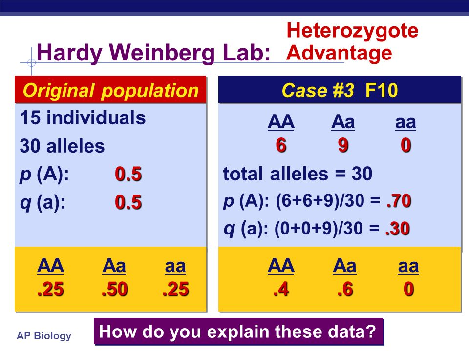 AP Biology Hardy Weinberg Lab: total alleles = p (A): (4+4+11)/30 = q (a): (0+0+11)/30 =.37 total alleles = p (A): (4+4+11)/30 = q (a): (0+0+11)/30 = individuals 30 alleles 0.5 p (A): q (a): individuals 30 alleles 0.5 p (A): q (a):0.5 Original population AA4 Aa11 aa0 How do you explain these data.