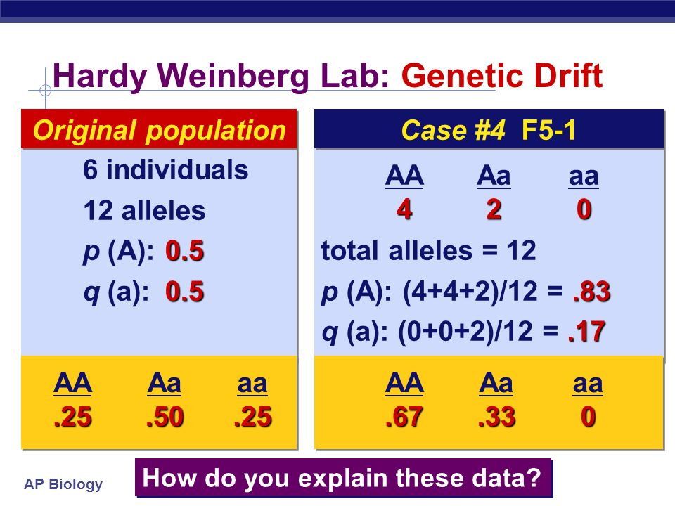 AP Biology Hardy Weinberg Lab: total alleles = p (A): (6+6+9)/30 = q ( a): (0+0+9)/30 =.30 total alleles = p (A): (6+6+9)/30 = q ( a): (0+0+9)/30 = individuals 30 alleles 0.5 p (A): q (a): individuals 30 alleles 0.5 p (A): q (a):0.5 Original population AA6 Aa9 aa0 How do you explain these data.