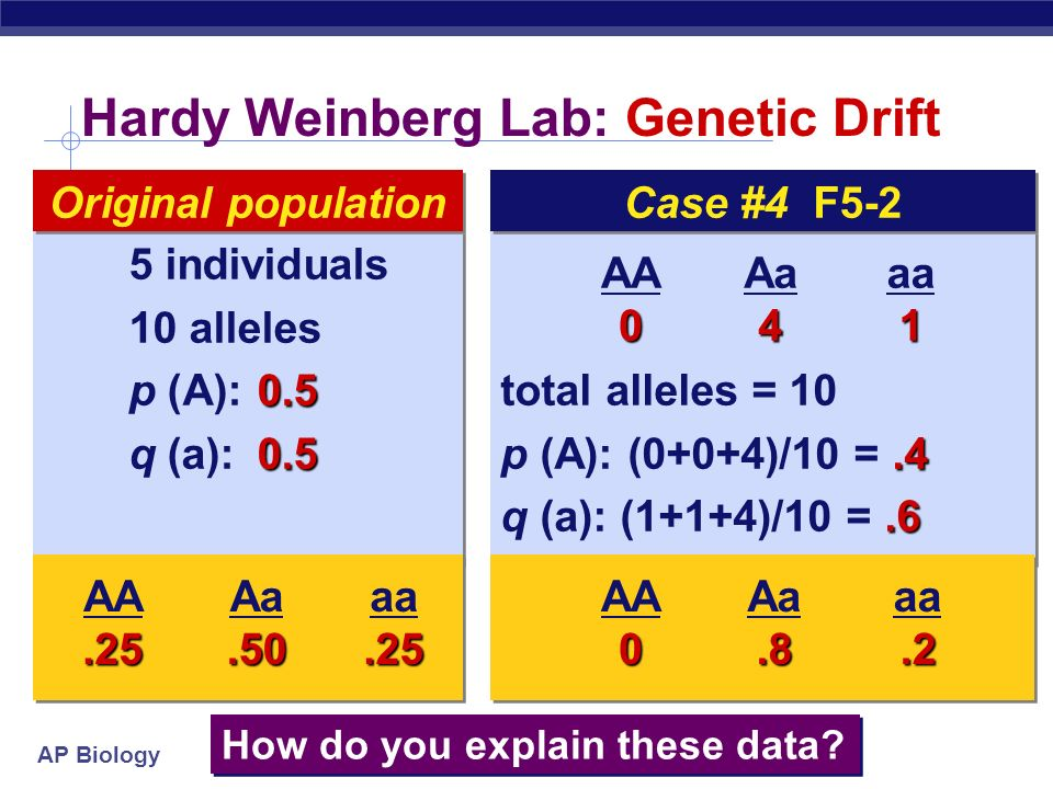 AP Biology Hardy Weinberg Lab: Genetic Drift total alleles = p (A): (4+4+2)/12 = q (a): (0+0+2)/12 =.17 total alleles = p (A): (4+4+2)/12 = q (a): (0+0+2)/12 =.17 6 individuals 12 alleles 0.5 p (A): q (a):0.5 6 individuals 12 alleles 0.5 p (A): q (a):0.5 Original population AA4 Aa2 aa0 How do you explain these data.