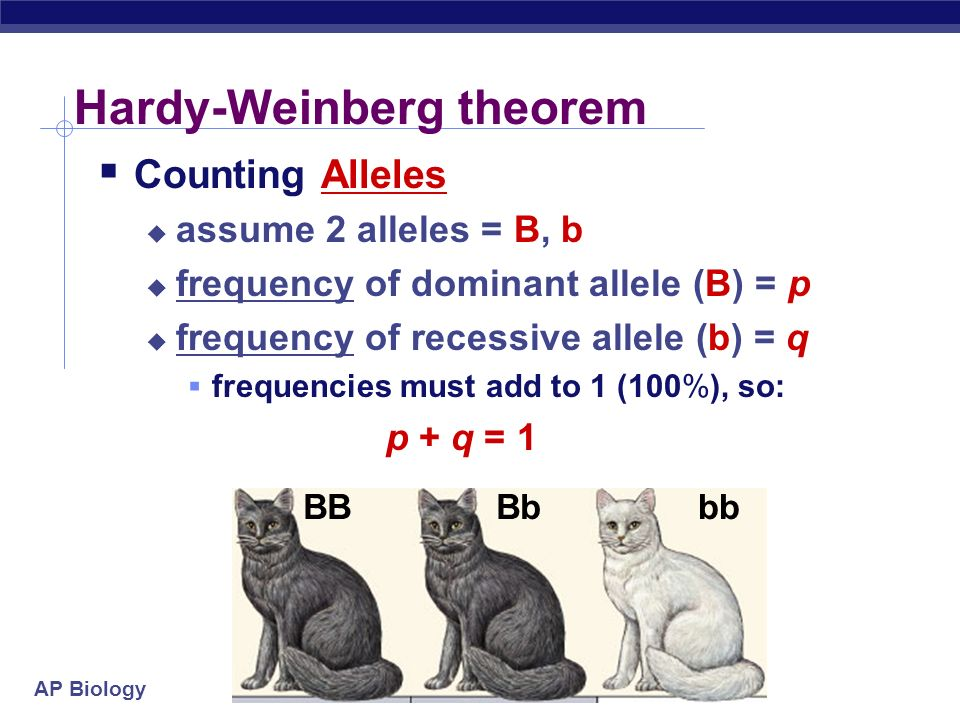 AP Biology Hardy-Weinberg equilibrium  Hypothetical, non-evolving population  preserves allele frequencies  Serves as a model (null hypothesis)  natural populations rarely in H-W equilibrium  useful model to measure if forces are acting on a population  measuring evolutionary change W.