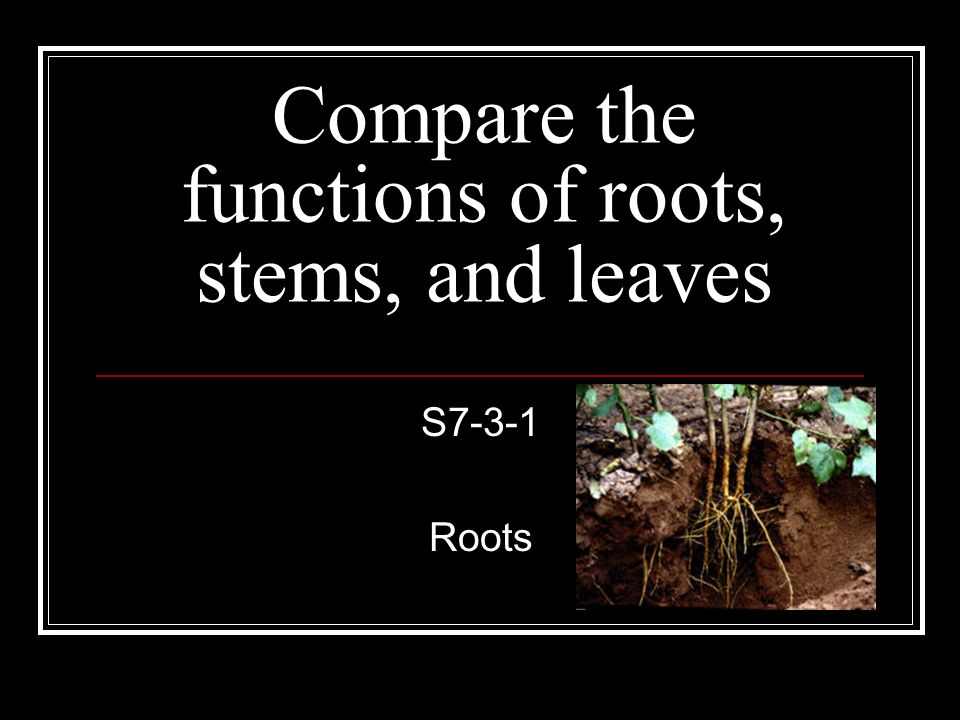 Compare the functions of roots, stems, and leaves S7-3-1 Roots